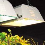 Какой свет лучше теплый или холодный для растений – Лампы для растений: критерии подбора