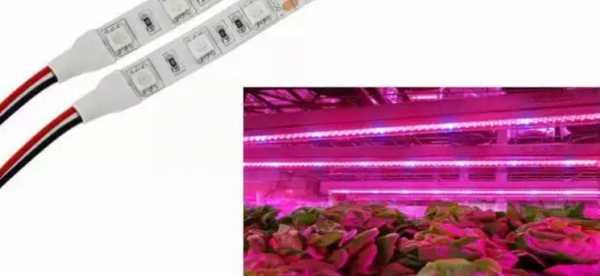 светодиодные ленты для растений полного спектра